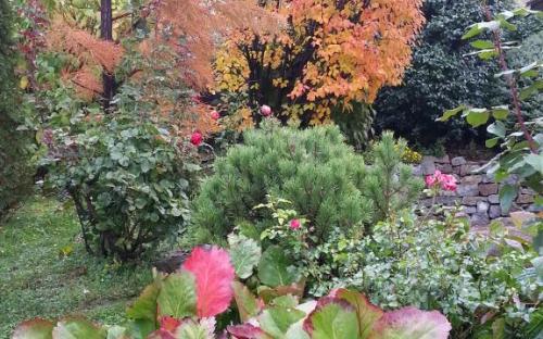 őszi összeültetés